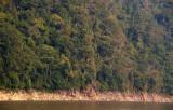 Mekong forest