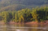 riverside bamboo
