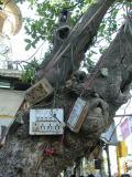 Electrici-tree
