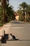 Cat in the Road
