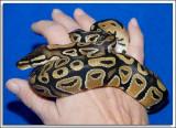 Jill-Snake_D3N_1172.jpg
