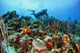Invisibles Reef
