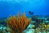 Karpata Reef