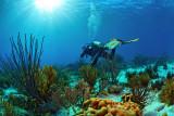 Angel City reef