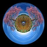 Eye of Cerrado