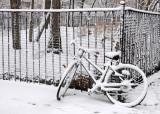 Snow Day - Time Landscape Garden