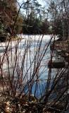Dogwood Red Bark Bush