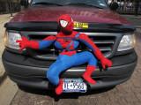 Spiderman Bumper Guard