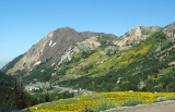 Little Cottonwood Canyon, Albion Basin, Alta & Snowbird Ski Areas