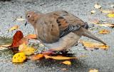 Doves - WSV Sasaki Garden
