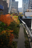 November 9, 2011 Photo Shoot - Washington Square & Chelsea High Line