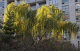 December 3, 2011 Photo Shoot - Greenwich Village Green Spaces & Midtown Manhattan