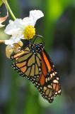 February 3-4, 2012 Photo Shoot - Dunnellon & Rainbow Springs State Park, Florida