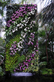 March 2, 2012 Photo Shoot - Orchid Show at NY Botanical Garden