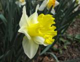 March 15, 2012 Photo Shoot - Greenwich Village Gardens