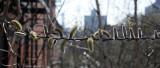 March 17, 2012 Photo Shoot - Greenwich Village & High Line