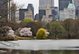 March 25, 2012 Central Park