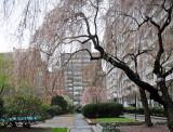 March 30-31, 2012 Photo Shoot - Greenwich Village Gardens