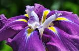 June 15, 2012 Photo Shoot - NY Botanical Garden 'Monet Show'