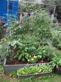 Children's Fruit, Vegetable, Herb and Flower Box Gardens