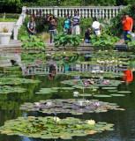 Summer 2012 - Brooklyn Botanic Garden