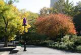 East View - Hawthorne & Scholar Trees