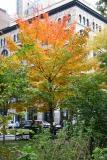 Maple at Washington Square East