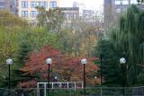 Fall - WSV Sasaki Garden