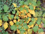 Ground Foliage