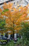 Maple & NYU School of Education Building