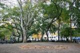 Sycamore & Washington Square East