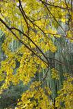 Mulberry  & Willow Foliage