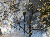 Foliage and Reflections in a Puddle