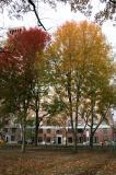 Maples at Washington Square West