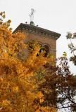 Judson Church Tower & Ginkgo Tree Foliage