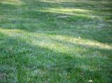 Freshly Raked Lawn