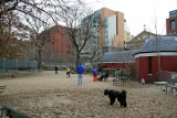 Main Dog Run - NYU Library & Student Affairs Buildings