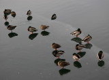 Reservoir - Ducks on an Ice Sheet