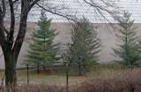 Pine Trees - Metropolitan Museum of Art