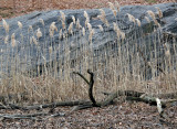 Two Headed Driftwood Serpent & Marsh Grass - Rambles Lakeshore