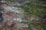 Manhattan Native Rock - Schist
