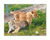Kowiachobee Animal Preserve