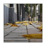 Rua da Barra 媽閣街