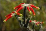 Cape Wild Flowers in Summer