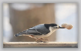 The Nuthatch Gang