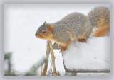 Gretta visits the ground feeder