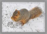 watching Gretta eat sunflower seeds in the snow