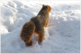 Darn snow...  how am I supposed to find my nuts?