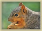 The Peanut Expert