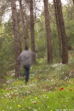 IMG_7870.jpg ahihud forest